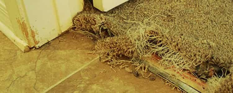 Best Carpet Repair Wanneroo